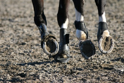Horse Racing Hooves