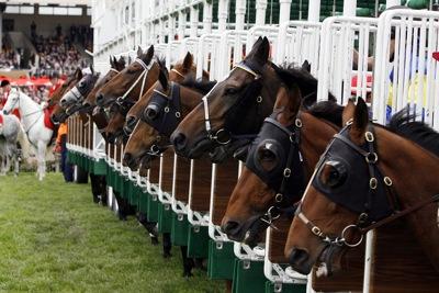 Horse Racing Start
