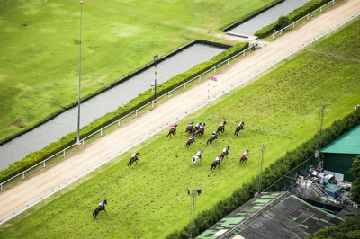 Horse Racing Birds Eye